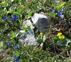 pomlad v gorah