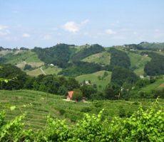 vinorodno območe