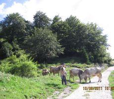 Marjo se je preizkusil v vlogi pastirja