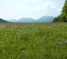 Pomlad gre v poletje 2013