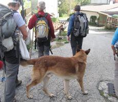 v vasi pa nas je sprejel vaški pes...