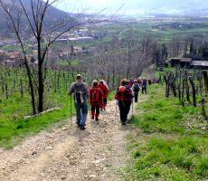 Pohod med vrhpoljskimi vinogradi - nedelja, 23. februar 2014