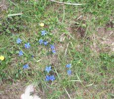 in travniki so nam postregli s spomladanskim cvetjem