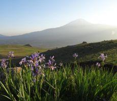 Irisi in Ararat v ozadju