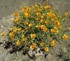 Rože v polnem cvetu