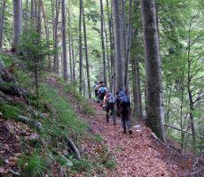Planinska šola varnejšega gibanja v gorskem svetu: Staničev vrh (1805 m) - nedelja, 15. junij 2014
