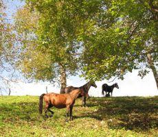 še konji so nas občudovali...
