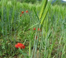 travniki