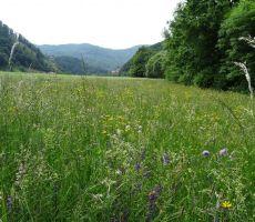 lepi travniki