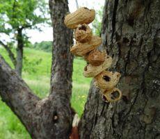 detel in njegovi arašidi