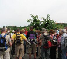 Pohod od češnje do češnje - GORIŠKA BRDA, 10. junij 2010