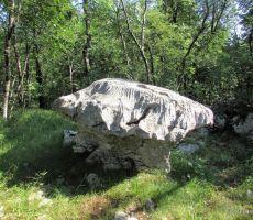 Kamnita goba