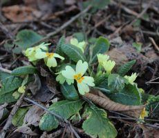 Prezgodnja pomlad