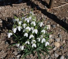 Znanilci pomladi