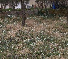 Pomlad in zvončki