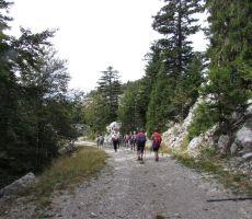 Lepa gozdna cesta