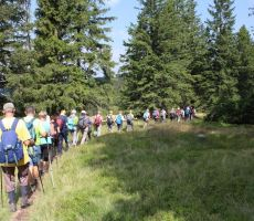Po Pohorskih gozdovih je hoja pravi užitek