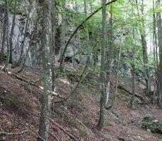 Skozi gozd v dolino