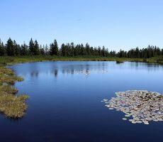 Lokvanji sredi jezera