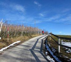 Pot med spečimi vinogradi