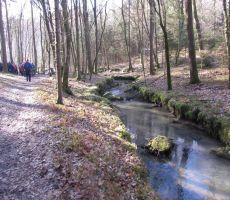 Hoja skozi čudovit gozd