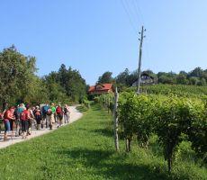 Pot mimo vinogradov
