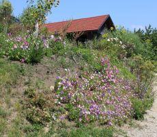 Počitniška hišica v cvetju