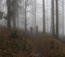 Megla v gozdu je skrivnostna