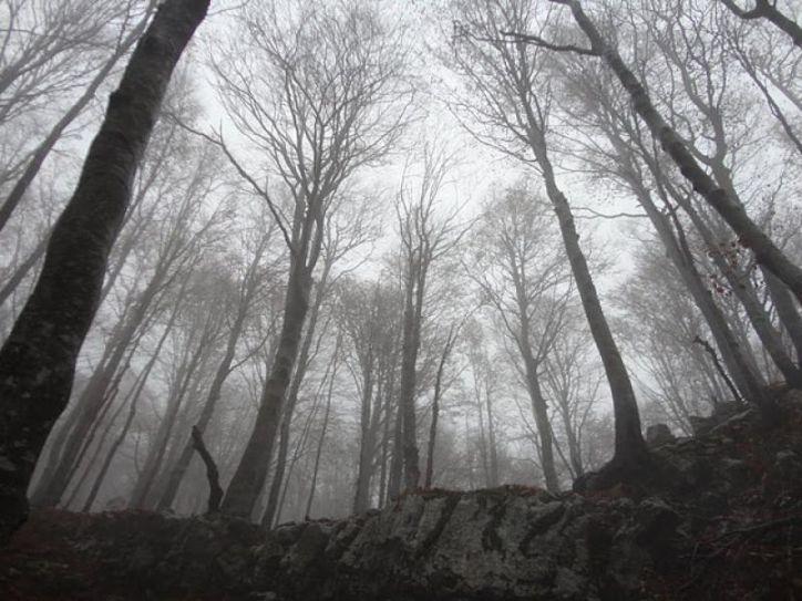 KRASJI VRH, 1773m, 04.12.2011